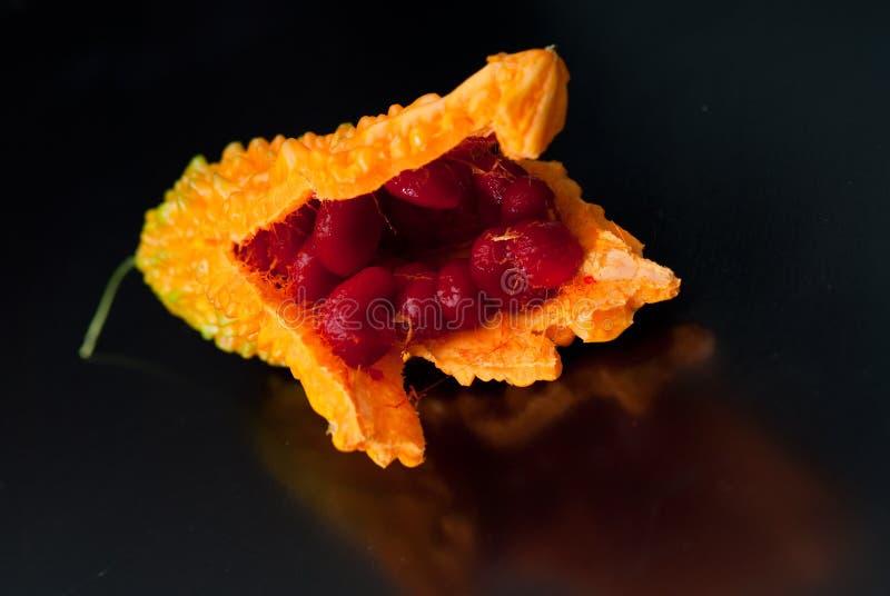 Momordica charantia stockfotografie
