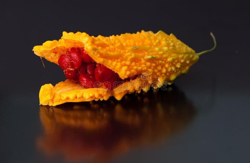 Momordica charantia lizenzfreies stockbild