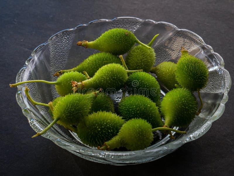 Momordicadioica eller tropisk grönsak Kalyan för kakoda nära den mumbai maharashtraen Indien arkivbilder