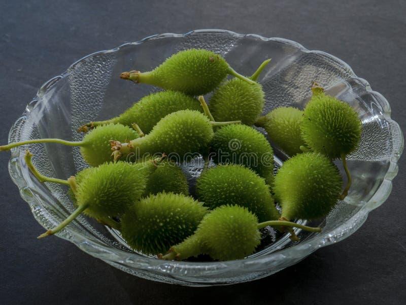 Momordicadioica eller tropisk grönsak Kalyan för kakoda nära den mumbai maharashtraen Indien arkivbild