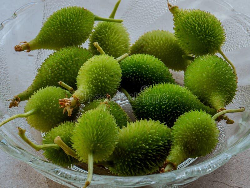 Momordicadioica eller tropisk grönsak Kalyan för kakoda nära den mumbai maharashtraen Indien royaltyfri bild