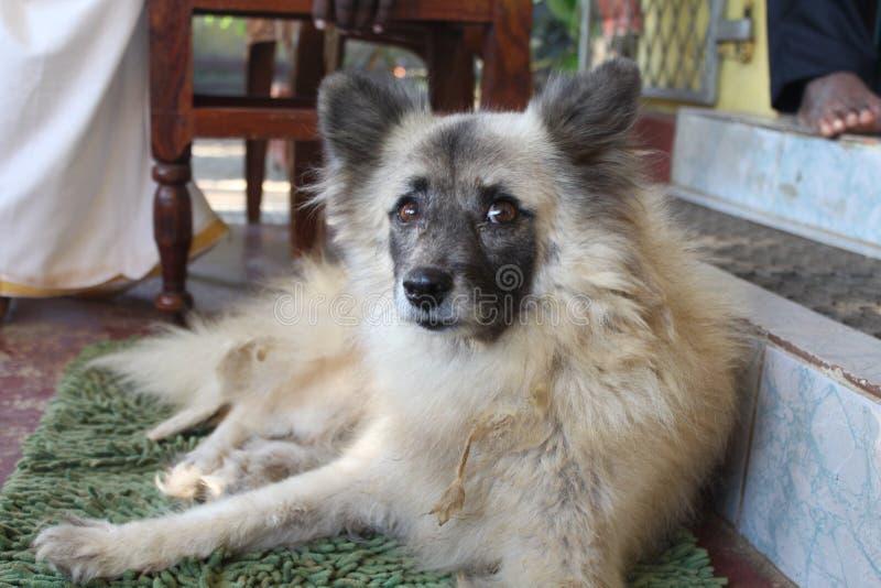 Mon animal familier est un chien image libre de droits