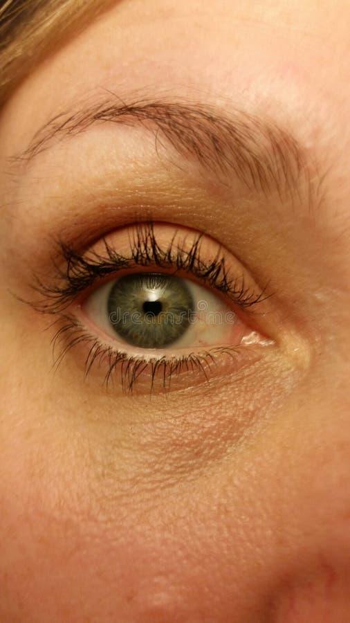 Mon bleu d'iris avec des tonalités jaunes images libres de droits