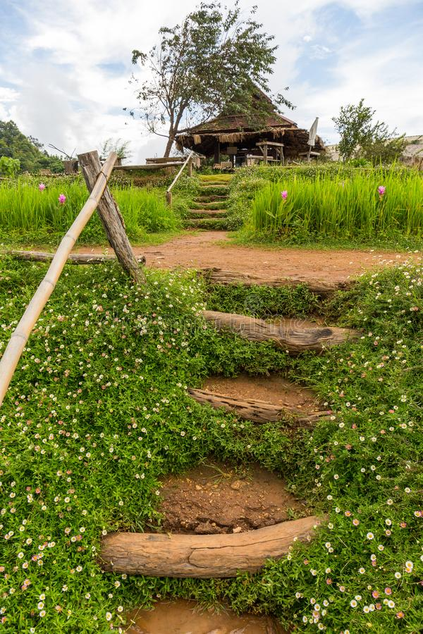 Mon Chaem kwiatu halny ogród w Chiang Mai, Tajlandia fotografia royalty free