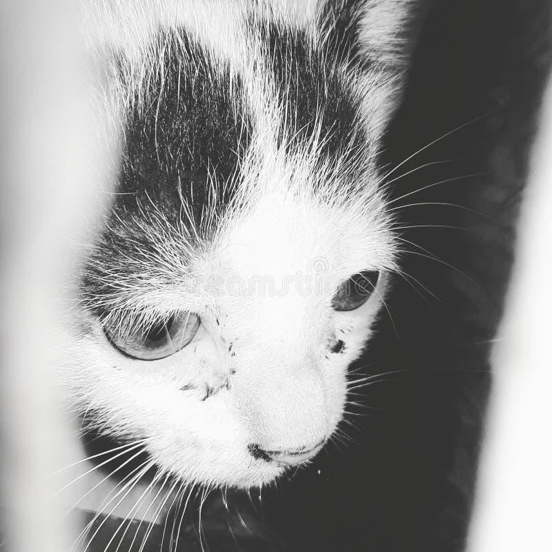 Mon chat photos stock