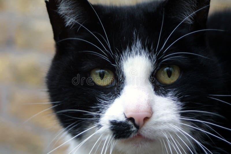 Mon chat photos libres de droits