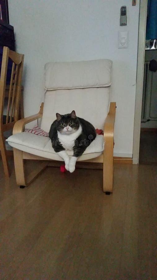 Mon chat image libre de droits