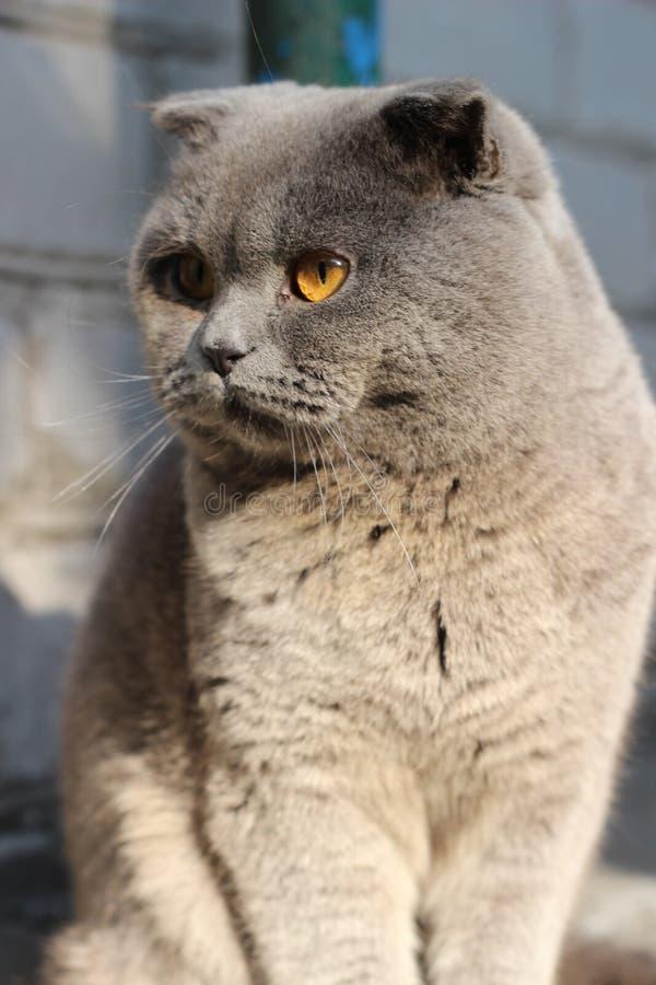 Mon chat images libres de droits