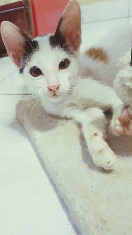 Mon chat d'animal familier images libres de droits