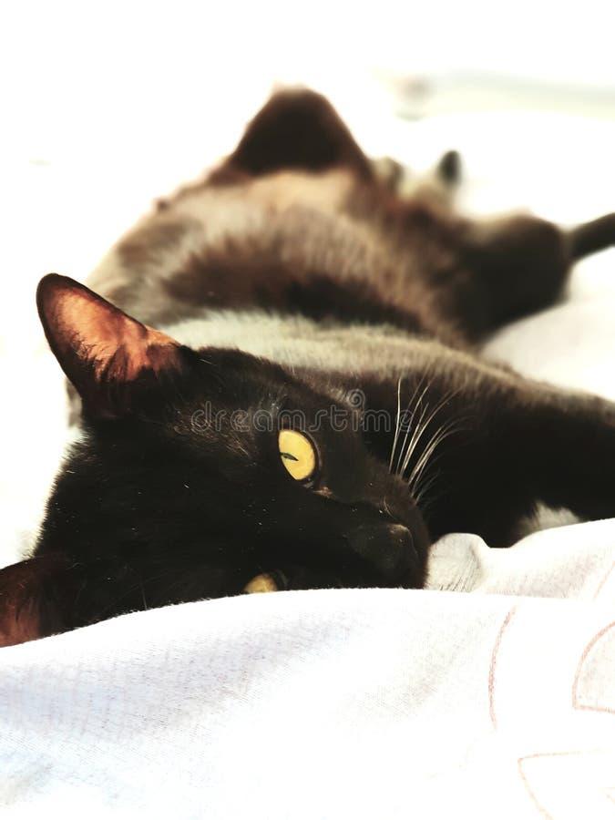Mon chat noir détendant sur mon lit photographie stock