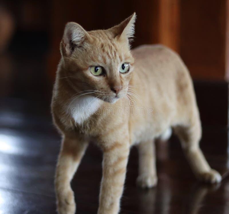 Mon chat orange images stock