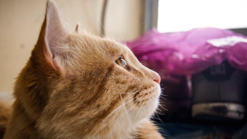 Mon chat pensent à la vie image libre de droits