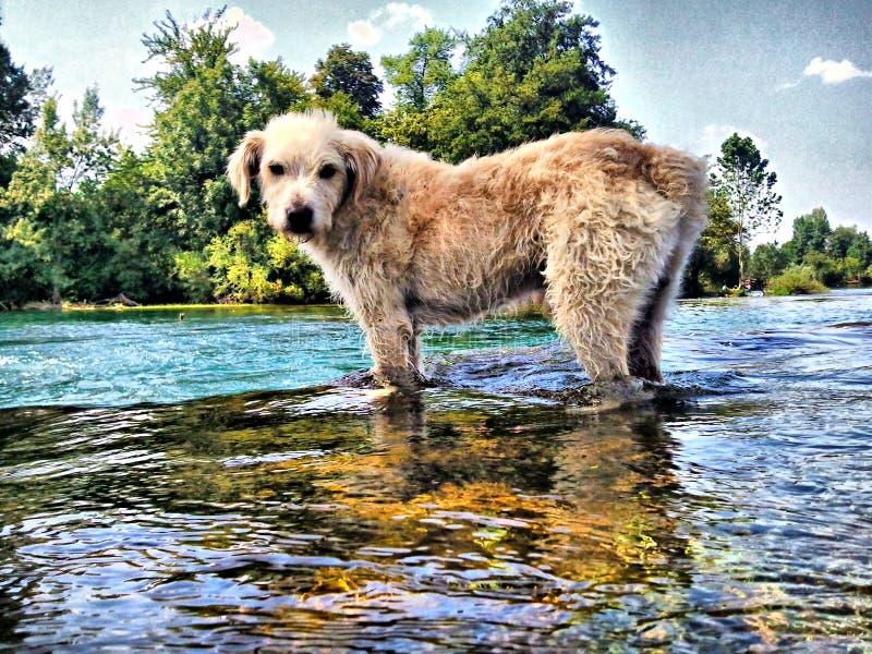 Mon chien photo libre de droits