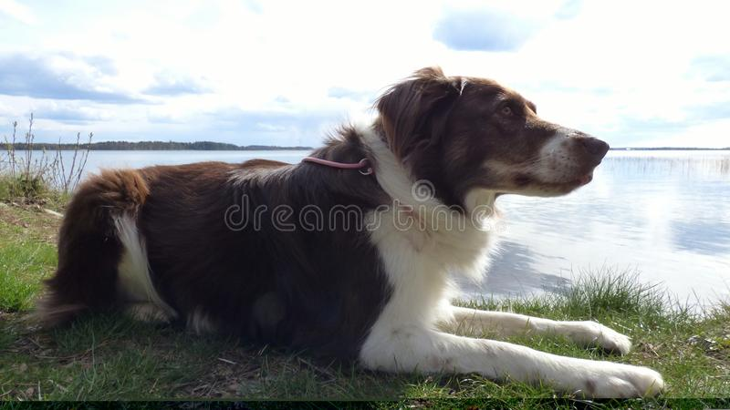 Mon chien aimé photos libres de droits