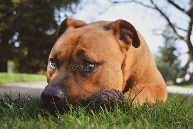 Mon chien observe image stock