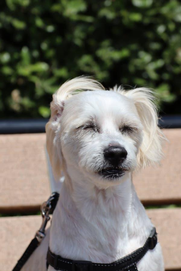 Mon chien sur le banc image libre de droits