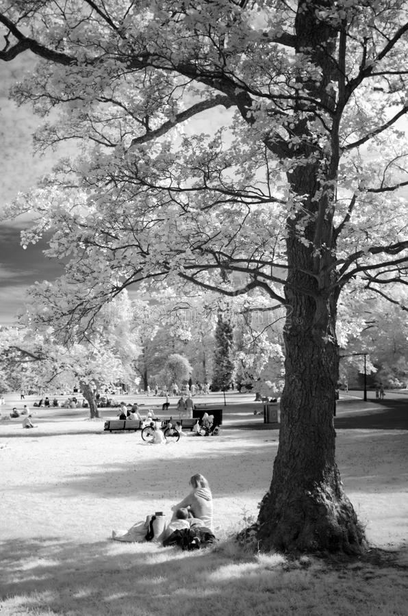 Mon and her two kids sitting under a tree - IR image royalty free stock image