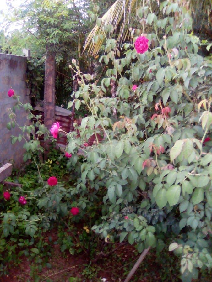 Mon jardin est beau images libres de droits