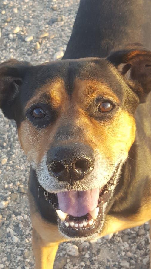 mon meilleur ami jamais le chien le plus chanceux sur terre photo libre de droits
