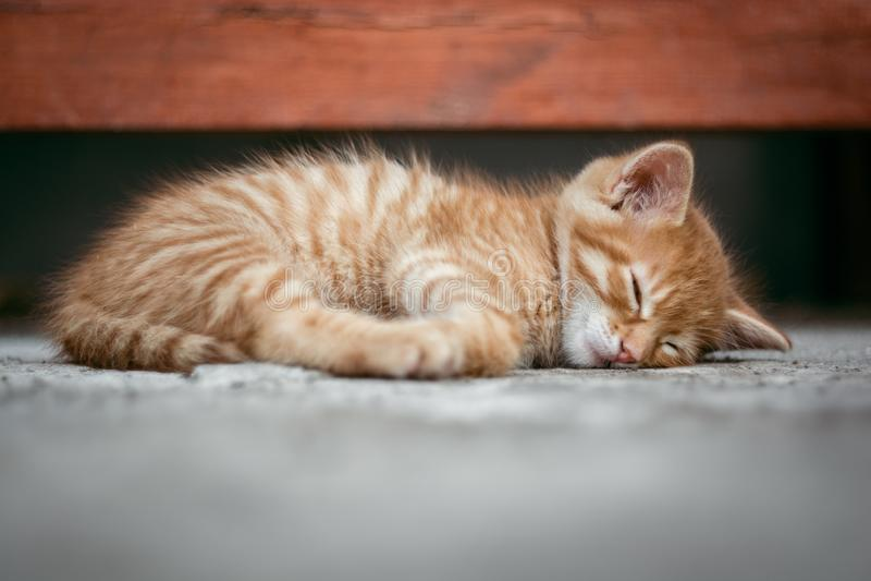 Mon petit chat dormant gentiment photographie stock libre de droits