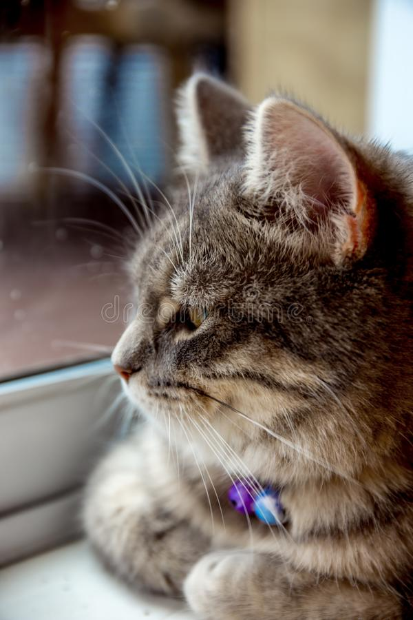 Mon petit chat reste à la maison pendant le jour d'hiver de congélation photos libres de droits