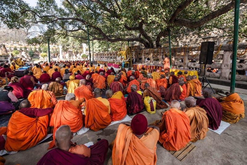 Monaci buddisti che si siedono sotto l'albero di Bodhi, Bodhgaya, India fotografia stock libera da diritti
