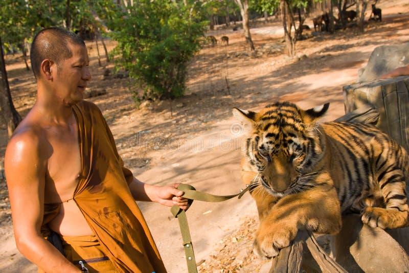 Monaco buddista con una tigre di Bengala fotografia stock libera da diritti
