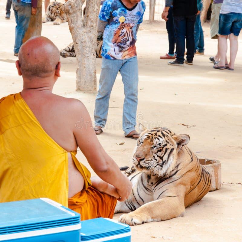 Monaco buddista con una tigre di Bengala a Tiger Temple in Kanchanaburi, Tailandia fotografie stock libere da diritti