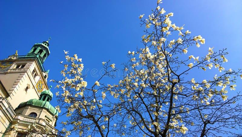 Monaco di Baviera, Germania: Albero di stellata della magnolia e museo nazionale bavarese fotografia stock
