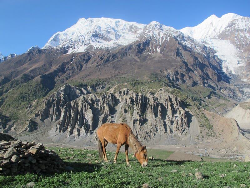 Download Monang stock image. Image of nepal, trek, landscape, monang - 20087145