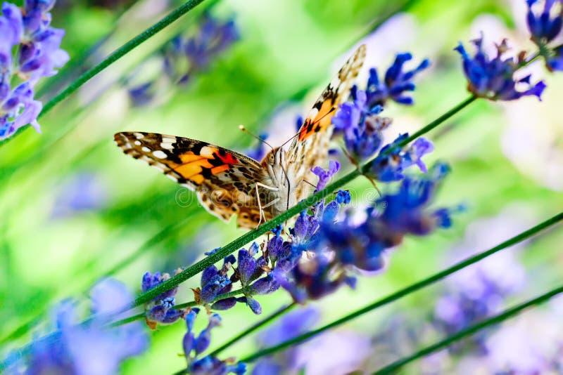 Monarca, danaus plexippus, farfalla nell'habitat della natura Insetto piacevole dal Messico Farfalla nella foresta verde immagine stock