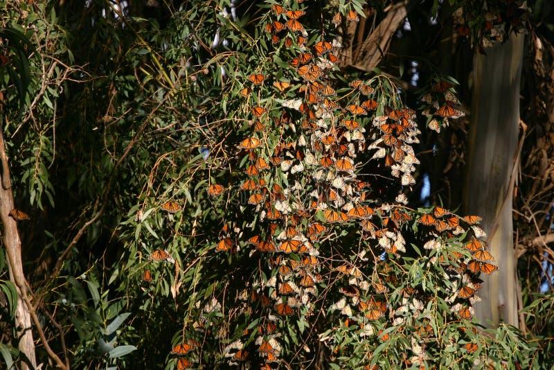 Monarcas en los puentes naturales 2 imagenes de archivo