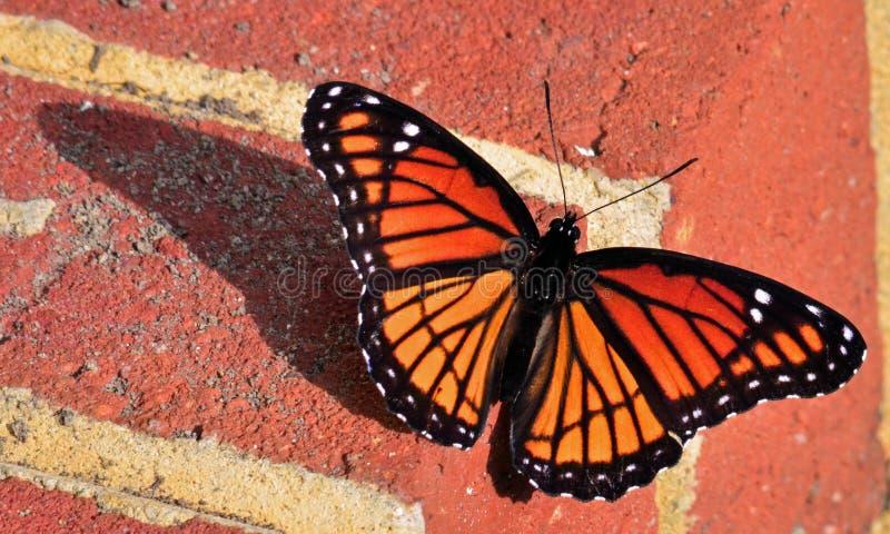 monarch stock afbeelding