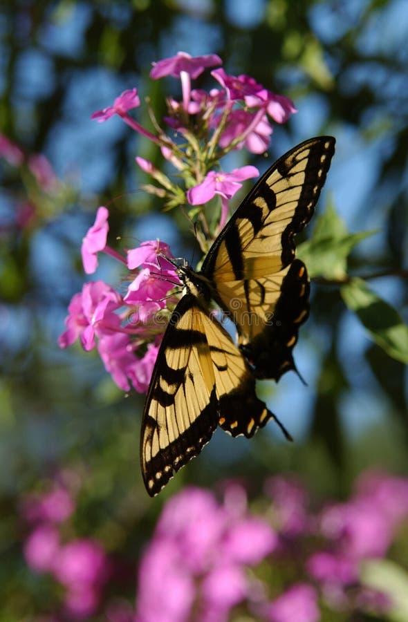 Monarch-Basisrecheneinheit 2 lizenzfreies stockfoto