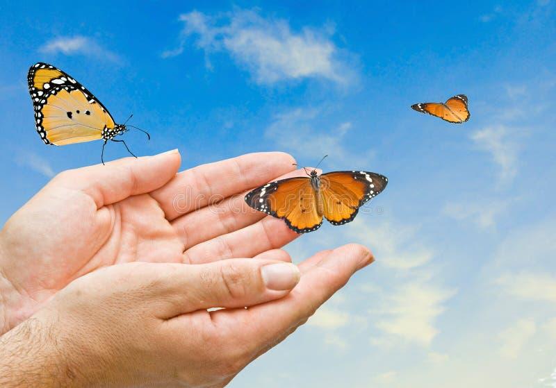 Monarch butterfies in den Händen stockfoto