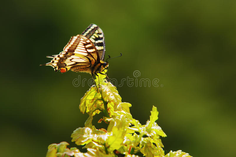 Download Monarch butterfly stock photo. Image of life, background - 23687480