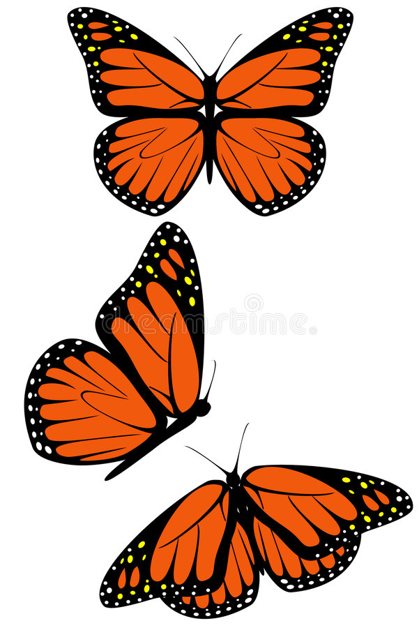 Download Monarch Butterfly Royalty Free Stock Images - Image: 8356639
