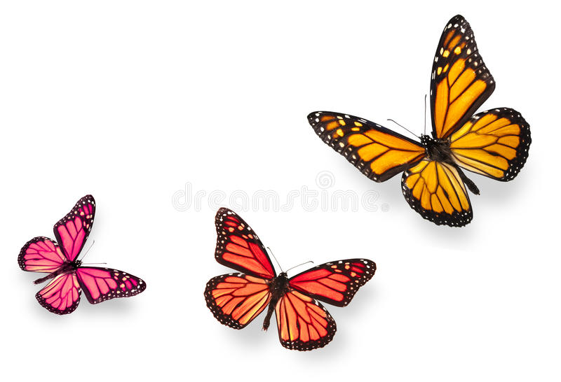 Monarch Butterfly Blue and Orange vector illustration