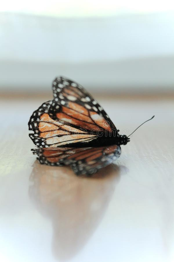 Monarch Butterfly on Brown Surface in Cloup Photo stock fotografie