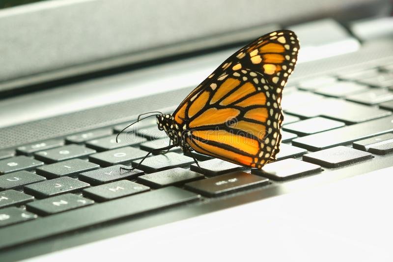 Monarch Butterfly on the pc keyboard ecological energy concept stock photo