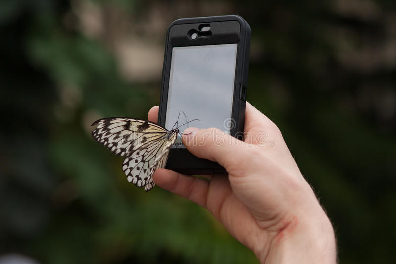 Monarch Butterfly sits Mobile phone in the botanical garden Montreal. Monarch Butterfly sits on the cell phone in the botanical garden Montreal Photo taken in stock photos