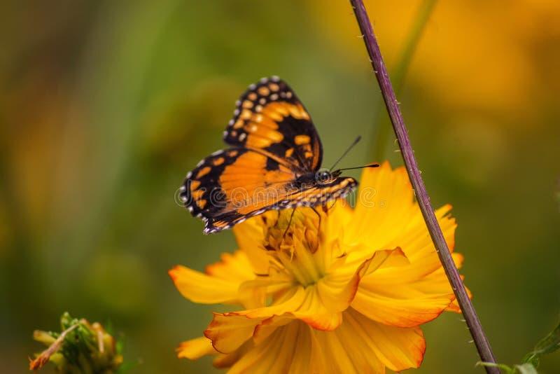 Monarch en de bloem stock foto