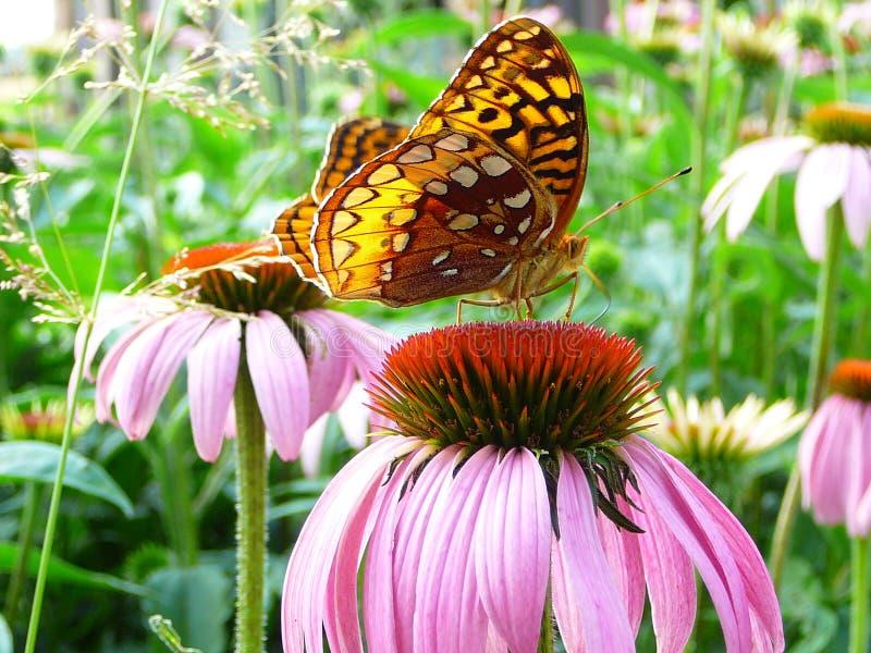 Monarch im Garten lizenzfreie stockfotos