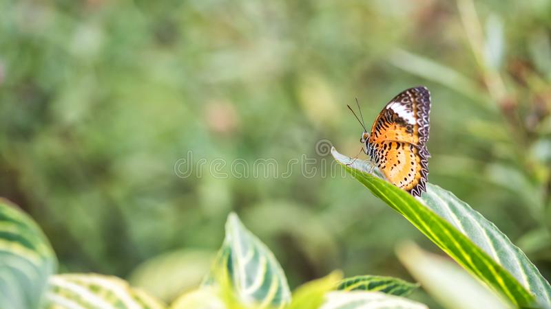 monarcha lub namiestnika motyl z natury tłem obraz royalty free