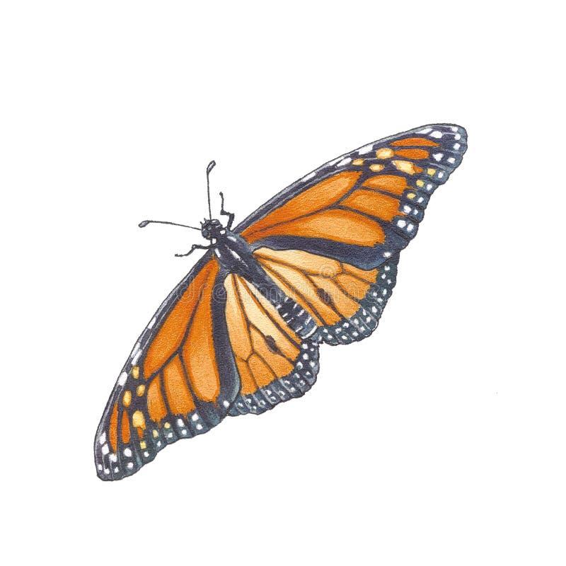 Monarchbasisrecheneinheit (Danaus plexippus) lizenzfreie abbildung