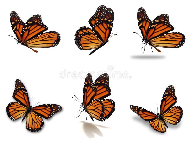 Monarchfalter eingestellt vektor abbildung