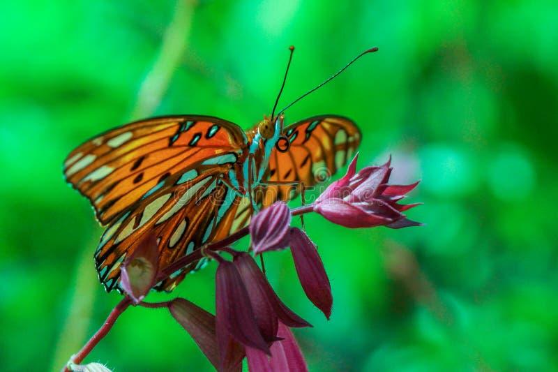 Monarchiczny motyl umieszczający na kwiacie obrazy royalty free
