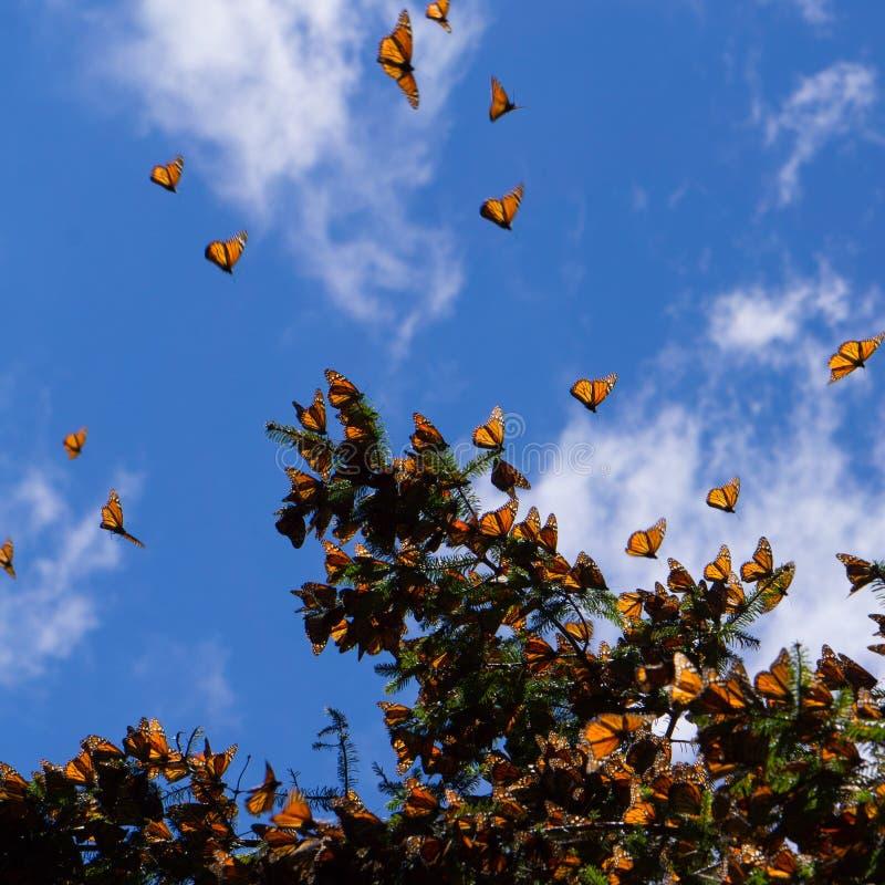 Monarchvlinders op boomtak op blauwe hemelachtergrond royalty-vrije stock afbeelding