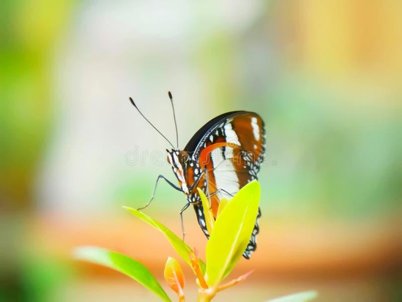 Monarkfjäril i trädgården arkivbild