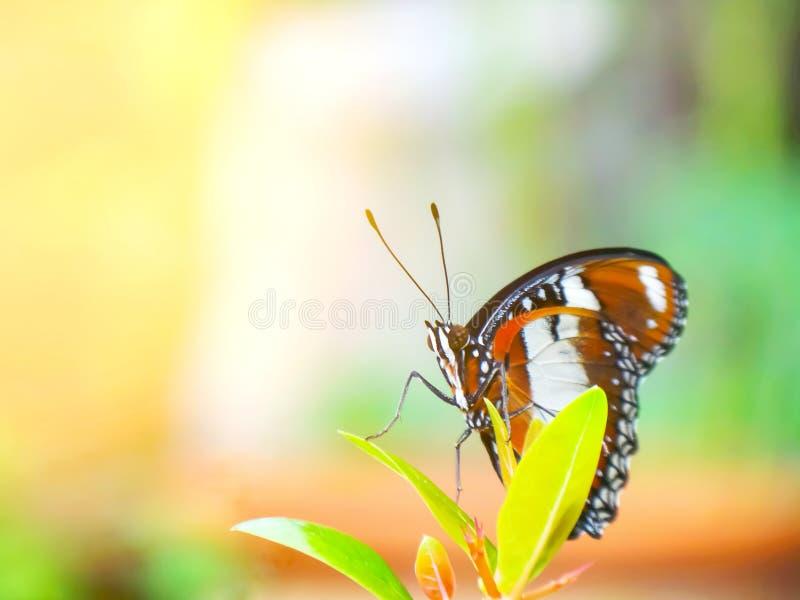 Monarkfjäril i trädgården arkivbilder